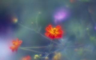 analog-film-canon-al-1-diy-single-lens-using-a-x35-vixens-pocket-lupe-p45n-magnifying-glass--kodak-ultramax-400-location-hama-rikyu-gardens-tokyo-japan-august-25-2017_36804518951_o.jpg