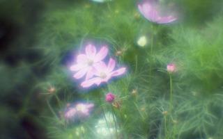 analog-film-canon-al-1-diy-single-lens-using-a-x35-vixens-pocket-lupe-p45n-magnifying-glass--kodak-ultramax-400-location-hama-rikyu-gardens-tokyo-japan-august-25-2017_36944192885_o.jpg