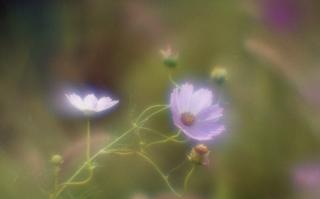 analog-film-canon-al-1-diy-single-lens-using-a-x35-vixens-pocket-lupe-p45n-magnifying-glass-fujicolor-100-location-kurome-river-side--nambata-castle-park-saitama-japan-september-12-2017_37299389692_o.jpg