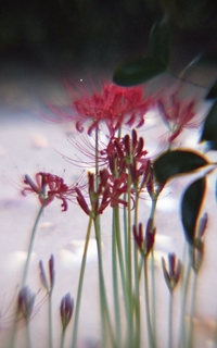 analog-film-canon-al-1-diy-single-lens-using-a-x35-vixens-pocket-lupe-p45n-magnifying-glass-fujicolor-100-location-kurome-river-side--nambata-castle-park-saitama-japan-september-9-2017_37201481295_o.jpg