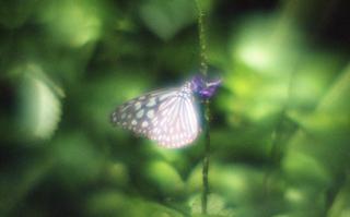 analog-film-exakta-rtl1000-with-homemade-single-lens-using-a-x20-magnifier-lens-fujicolor-100-location-adachi-park-of-livingthings-tokyo-july-14-2017_35110653494_o.jpg