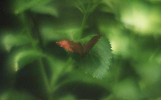 analog-film-exakta-rtl1000-with-homemade-single-lens-using-a-x20-magnifier-lens-fujicolor-100-location-adachi-park-of-livingthings-tokyo-july-14-2017_35110657464_o.jpg