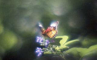 analog-film-exakta-rtl1000-with-homemade-single-lens-using-a-x20-magnifier-lens-fujicolor-100-location-adachi-park-of-livingthings-tokyo-july-14-2017_35780071302_o.jpg