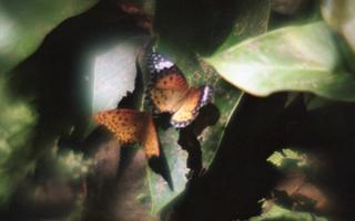 analog-film-exakta-rtl1000-with-homemade-single-lens-using-a-x20-magnifier-lens-fujicolor-100-location-adachi-park-of-livingthings-tokyo-july-14-2017_35909501646_o.jpg