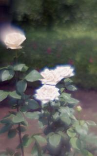 exakta-rtl1000-with-homemade-single-lens-using-a-x2-magnifier-lens--fujicolor-100-location-kawaguchi-green-center-saitama-japan-may-27-2017_34865494452_o.jpg