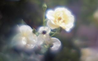 exakta-rtl1000-with-homemade-single-lens-using-a-x2-magnifier-lens--fujicolor-100-location-kawaguchi-green-center-saitama-japan-may-27-2017_34989242736_o.jpg