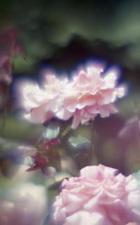 exakta-rtl1000-with-homemade-single-lens-using-a-x2-magnifier-lens--fujicolor-100-location-kawaguchi-green-center-saitama-japan-may-27-2017_35029292845_o.jpg