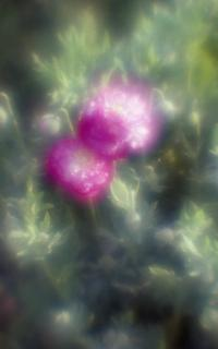 exakta-rtl1000-with-homemade-single-lens-using-a-x2-magnifier-lens--fujicolor-100-location-konosu-saitama-japan-may-20-2017_33948384504_o.jpg