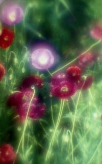 exakta-rtl1000-with-homemade-single-lens-using-a-x2-magnifier-lens--fujicolor-100-location-konosu-saitama-japan-may-20-2017_34628591342_o.jpg