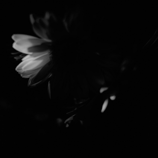 flower-rolleiflex-sl66-with-ttl-meter-finder--filmed-by-rollei-hft-planar28--80-kodak-tri-x-400--my-home-asaka-shi-japan-february-14-2016_24832938210_o.jpg