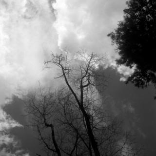 meopta-flexaret-iv-belar-f80mm-kodak-tri-x-400-location-wako-jurin-koen-wako-forest-park-saitama-september-3-2016_29339165520_o.jpg