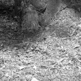 meopta-flexaret-iv-belar-f80mm-kodak-tri-x-400-location-wako-jurin-koen-wako-forest-park-saitama-september-3-2016_29594798236_o.jpg