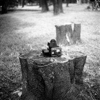 meopta-flexaret-iv-belar-f80mm-kodak-tri-x-400-location-wako-jurin-koen-wako-forest-park-saitama-september-3-2016_29594815306_o.jpg