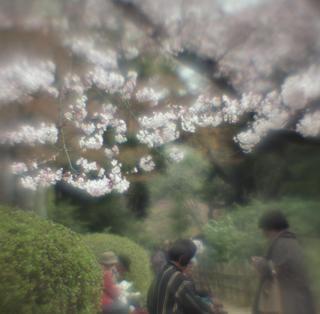 rolleiflex-sl66-with-ttl-meter-finder--filmed-by-homemade-lens-using-a-x23-magnifier-lens-a-x20-magnifier-lens-etc--fuji-pro-160-ns--rikugi-en-asakusa-tokyo-japan-april-1-2016_25688751444_o.jpg