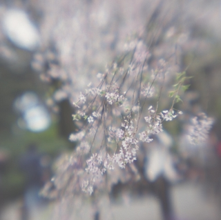 rolleiflex-sl66-with-ttl-meter-finder--filmed-by-homemade-lens-using-a-x23-magnifier-lens-a-x20-magnifier-lens-etc--fuji-pro-160-ns--rikugi-en-asakusa-tokyo-japan-april-1-2016_26014449550_o.jpg