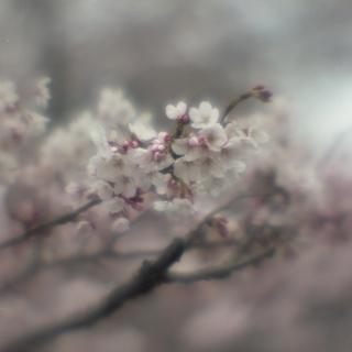 rolleiflex-sl66-with-ttl-meter-finder--filmed-by-homemade-lens-using-a-x23-magnifier-lens-a-x20-magnifier-lens-etc--fuji-pro-160-ns--rikugi-en-asakusa-tokyo-japan-april-1-2016_26195002682_o.jpg