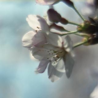 rolleiflex-sl66-with-ttl-meter-finder--filmed-by-homemade-lens-using-a-x23-magnifier-lens-a-x20-magnifier-lens-etc--fuji-pro-160-ns--rikugi-en-asakusa-tokyo-japan-april-1-2016_26221105351_o.jpg