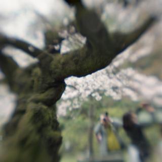 rolleiflex-sl66-with-ttl-meter-finder--filmed-by-homemade-lens-using-a-x23-magnifier-lens-a-x20-magnifier-lens-etc--fuji-pro-160-ns--rikugi-en-asakusa-tokyo-japan-april-1-2016_26287346545_o.jpg