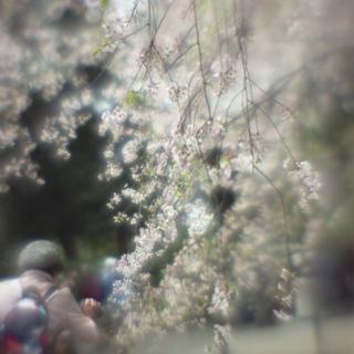 rolleiflex-sl66-with-ttl-meter-finder--filmed-by-homemade-lens-using-a-x23-magnifier-lens-a-x20-magnifier-lens-etc--fuji-pro-160-ns--rikugi-en-asakusa-tokyo-japan-april-1-2016_26287389325_o.jpg