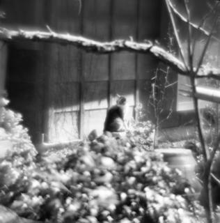 rolleiflex-sl66-with-ttl-meter-finder--filmed-by-homemade-lens-using-a-x23-magnifier-lens-kodak-tri-x-400--kawagoe-festival-kawagoe-shi-japan-march-26-2016_25689050314_o.jpg