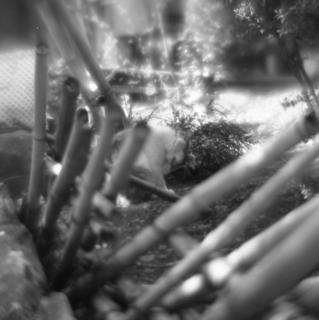 rolleiflex-sl66-with-ttl-meter-finder--filmed-by-homemade-lens-using-a-x23-magnifier-lens-kodak-tri-x-400--kawagoe-festival-kawagoe-shi-japan-march-26-2016_25910924360_o.jpg