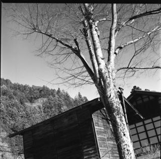 rolleiflex-sl66-with-ttl-meter-finder--filmed-by-rollei-hft-planar28--80-ilford-delta-400--yellow-filter-location-foot-of-mt-asama-nagano-and-nanmoku-village-gunma-japan-january-10-2016_24523723366_o.jpg