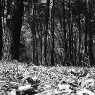 voigtlnder-superb-1933--skopar-75mm-f35-with-y-filter--kodak-tri-x-400-location-musashi-kyuryo-national-government-park-saitama-japan-april-2-2017_33097466353_o.jpg
