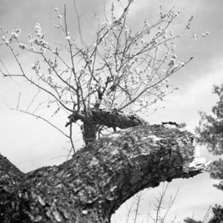 voigtlnder-superb-1933--skopar-75mm-f35-with-y-filter--kodak-tri-x-400-location-musashi-kyuryo-national-government-park-saitama-japan-april-2-2017_33097521183_o.jpg