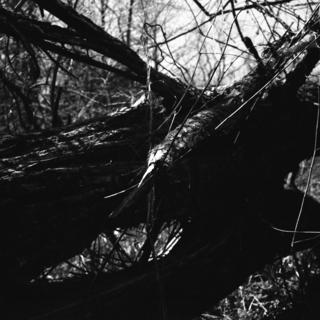 voigtlnder-superb-1933--skopar-75mm-f35-with-y-filter--kodak-tri-x-400-location-musashi-kyuryo-national-government-park-saitama-japan-april-2-2017_33098235673_o.jpg