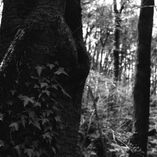voigtlnder-superb-1933--skopar-75mm-f35-with-y-filter--kodak-tri-x-400-location-musashi-kyuryo-national-government-park-saitama-japan-april-2-2017_33525295190_o.jpg