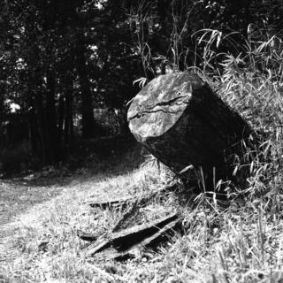 voigtlnder-superb-1933--skopar-75mm-f35-with-y-filter--kodak-tri-x-400-location-musashi-kyuryo-national-government-park-saitama-japan-april-2-2017_33753877692_o.jpg