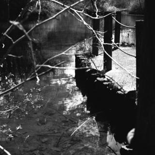 voigtlnder-superb-1933--skopar-75mm-f35-with-y-filter--kodak-tri-x-400-location-musashi-kyuryo-national-government-park-saitama-japan-april-2-2017_33910956725_o.jpg